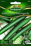 Gurken Gewächshaus- Saladin - Cucumis sativus L. QLB Premium Saatgut Gurken