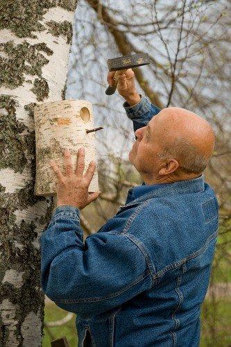 nest4nature Nistkasten aus Birkenholz 30 cm hoch - 3