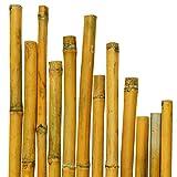 50Bambusstangen cm 150x Ø mm 20-22;Für Pflanzen, Landwirtschaft, Garten, Möbel, Strukturen, Dekoration