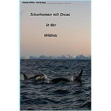 Schwimmen mit Orcas in der Wildnis