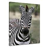 Kunstdruck - Zebra - Portrait - 50x60 cm - Bilder als Leinwanddruck - Wandbild von Bilderdepot24 - Tierwelten - Afrika - gestreiftes Wildpferd