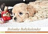 Bolonka Babykalender 2019 (Wandkalender 2019 DIN A3 quer): Ein gelungener Kalender mit hinreißenden Welpenfotos, denen sich kein Herz verschließen kann. (Monatskalender, 14 Seiten ) (CALVENDO Tiere)