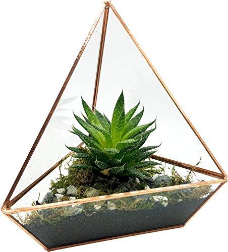 Cultivea Terrarium aus Glas – Dekoration und Modernes Design – Größe 18 cm x 18 cm x 20 cm – Formen Triangulaire – Verarbeitung der Kanten Kupfer und Hochwertig