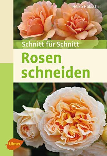 Rosen schneiden: Schnitt für Schnitt - Schnitt, Pflege