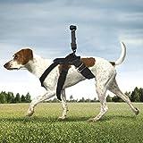 Wewoo Cintura Toracica, Imbracatura Cane Dog Fetch Hound per GoPro New Hero / HERO6 / 5/5 Session / 4/4/3 + / 3/2/1, Xiaoyi ® OSMO Pocket e Altre telecamere d'azione, con Accessori di Adattatore (n