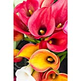 Gifts Flowers Food Best Deals - ArtzFolio Calla Lily Flowers - Medium Size 12.0 inch x 18.0 inch - UNFRAMED PREMIUM PAPER POSTER Wall Artwork Digital PRINT like HAND PAINTINGS : BEAUTIFUL INTERIOR Home Décor Photo Gifts & Decorative Paintings for Living, Drawing, Dining Room, Outdoo