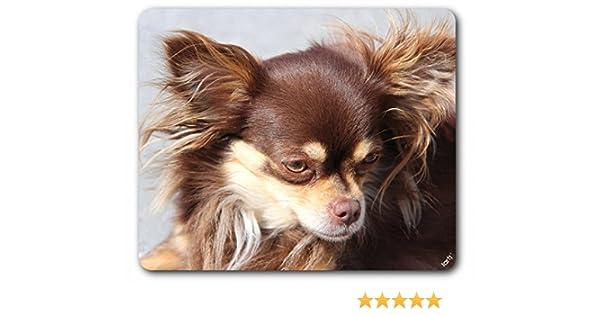 1art1 Hunde Brauner Langhaar Chihuahua Mauspad 23 X 19 Cm Amazon De Kuche Haushalt