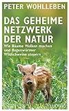 'Das geheime Netzwerk der Natur: Wie Bäume Wolken machen und Regenwürmer Wildschw...' von Peter Wohlleben