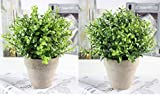 U'Artlines 2er Künstliche Kunststoff Mini Pflanzen Topiary Sträucher Gefälschte Pflanzen Mit Graue Topf für Badezimmer, Haus Dekorationen(2er Grün)