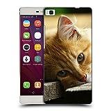 Just Phone Cases Schutz Hülle TPU Case Schutzhülle Silikon Tasche Dünn Transparent // V00004287 Katze liegend auf Holzbrettern // Huawei Ascend P8