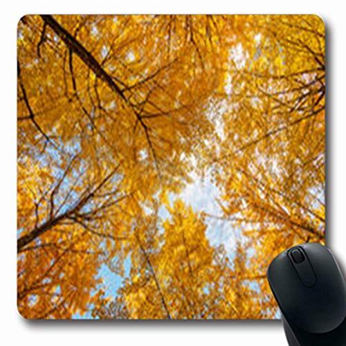 Luancrop Mousepads Biloba aufwärts Ansicht-Fall-Ginkgo-Blau-Baum-Natur-Winkel parkt längliches Spiel-Mausunterlage-rutschfeste Gummimatte im Freien -