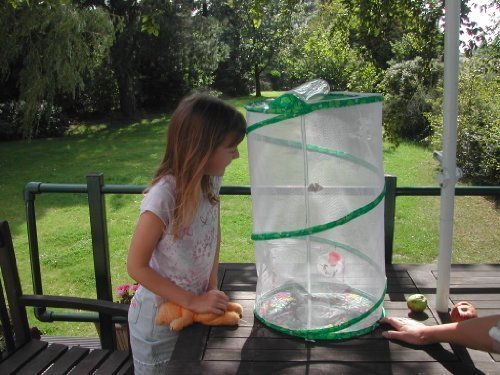 Preisvergleich Produktbild Butterfly Garden Kit Refill Voucher (prepaid) by Insect Lore