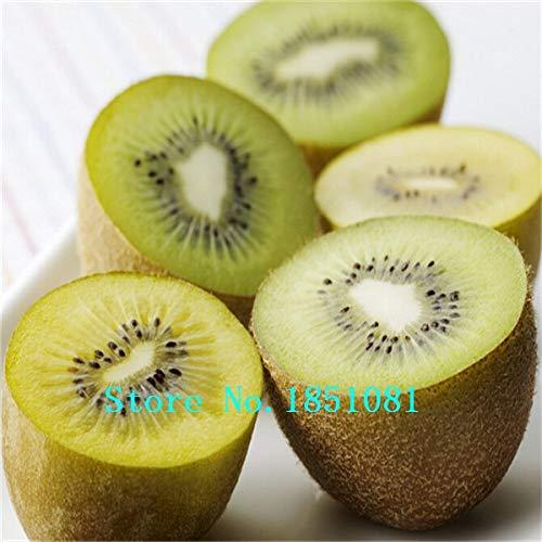 AGROBITS Semillas fruta kiwi maceta Plantas Mini árbol