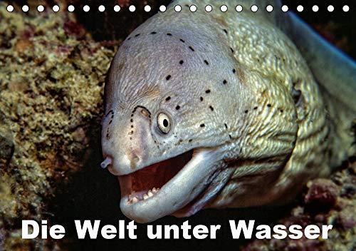 Die Welt unter Wasser (Tischkalender 2021 DIN A5 quer): Unterwasseraufnahmen von Meerestieren im Mittelmeer, Roten Meer und Indischen Ozean. (Monatskalender, 14 Seiten ) (CALVENDO Tiere)
