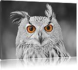 süßer Eulen Kauz schwarz/weiß Format: 60x40 auf Leinwand, XXL riesige Bilder fertig gerahmt mit Keilrahmen, Kunstdruck auf Wandbild mit Rahmen, günstiger als Gemälde oder Ölbild, kein Poster oder Plakat