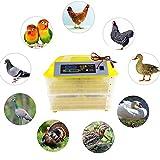 GBYNB Máquina de incubadora de Aves de Corral 96 Temperatura Digital incubadora de Huevo sorcrita automática para Loro de codornices de Pato de Pollo 12V 220V,Yellow,57 * 54 * 31cm
