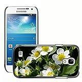 Hülle Case Schutzhülle Cover Premium Case // M00238284 Strawberry Blumen Erdbeerpflanze // Samsung Galaxy S4 Mini i9190