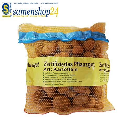 Samenshop24® Pflanzkartoffeln Sorte: Linda, Inhalt: 2,5kg ca. 35 Stück, Premium Saatkartoffeln, Zertifiziertes Pflanzgut, das Original vom Fachmann