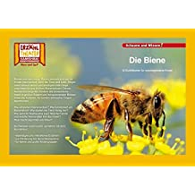 Kamishibai: Die Biene: 10 Fotobildkarten für das Erzähltheater