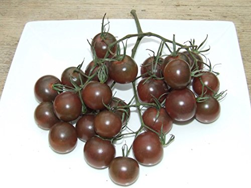 Famous Hungarian Black Cherry Tomatos, Best Taste Worldwide !! HEIRLOOM, 20 graines, NON GMO