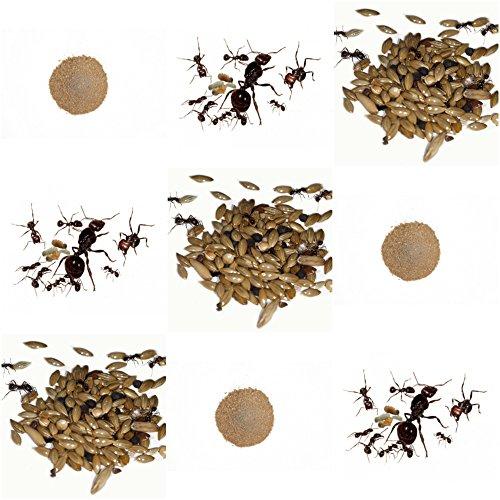 AntHouse Kits de Rechange Complet pour fourmilière de Sable