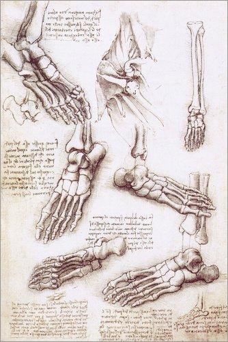 Leinwandbild 80 x 120 cm: Fußanatomie von Leonardo da Vinci - fertiges Wandbild, Bild auf Keilrahmen, Fertigbild auf echter Leinwand, Leinwanddruck