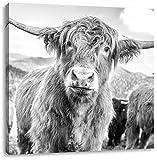 Niedlicher Blick einer Kuh an der Weide Kunst B&W, Format: 70x70 auf Leinwand, XXL riesige Bilder fertig gerahmt mit Keilrahmen, Kunstdruck auf Wandbild mit Rahmen, günstiger als Gemälde oder Ölbild, kein Poster oder Plakat