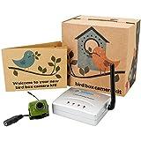 Green Feathers Caméra sans fil oiseau boîte avec vision nocturne, récepteur sans fil, 700TVL vidéo et audio, Plug UK