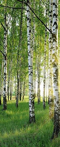 r Birken - Bäume - Wald Deko Banner Stoff Poster 75x180cm ()