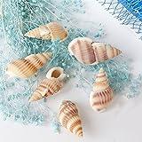 HuntGold Ornamento del paisaje en miniatura de la concha de peregrino Shell del mar playa de la arena--concha