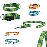 CarlCurt - Fashion Line: Hundehalsband & Hundeleine Im Set, Aus Strapazierfähigem Polyester, M 35-53cm & M 1,90m, Grün
