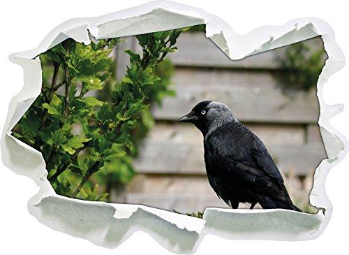 bello uccello nero sul prato giardino, di carta 3D autoadesivo della parete formato: 62x45 cm decorazione della parete 3D Wall Stickers parete decalcomanie