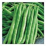 Stangenbohne - frühe, ertragreiche Sorte - Mombacher Speck - 30 Samen