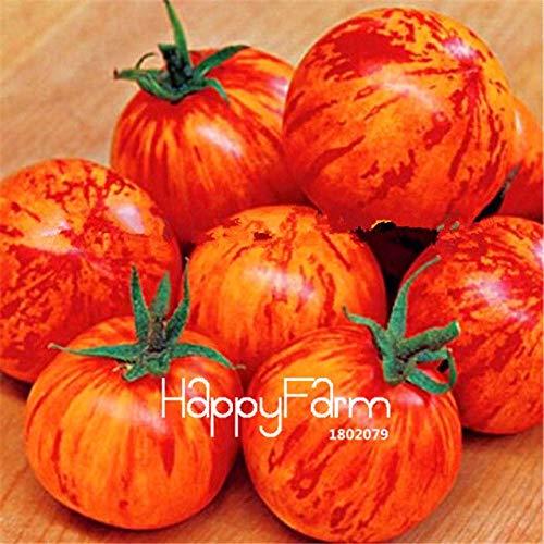 Shopmeeko Samen: Neue Frische 20 PC/Los Regenbogen-Tomatenpflanzen, Bonsai-Bio-Gemüse & amp; Obst Plantas, Topfpflanze für Haus & amp; Garten: 19