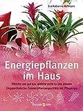 Energiepflanzen im Haus: Welche uns gut tun, welche nicht zu uns passen - Ungewöhnliche Zimmerpflanzenporträts mit Pflegetips