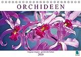 Orchideen: Filigrane Eleganz - prachtvolle Farben (Tischkalender 2019 DIN A5 quer): Unbegrenzte Formenvielfalt, verschwenderisches Farbenspiel (Monatskalender, 14 Seiten ) (CALVENDO Hobbys)
