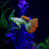 yuyoug Kunststoff Schwimmen Faux Künstliche Fake Gold Fisch Aquarium Fisch Tank Decor Orname Geschenk, C, Einheitsgröße
