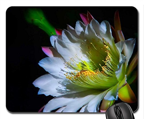 the-beauty-of-brahma-kamal-mouse-pad-mousepad-flowers-mouse-pad
