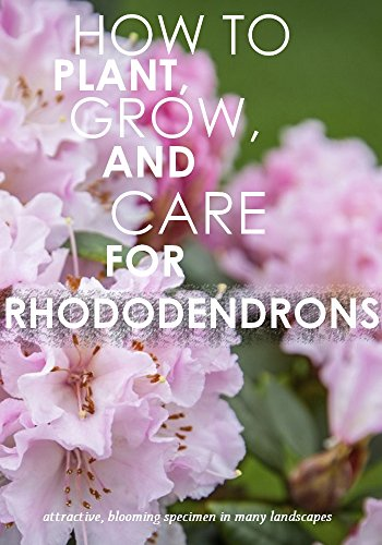 how-to-plant-grow-and-care-for-rhododendrons