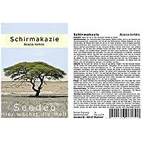 Seedeo® Schirmakazie (Acacia tortilis) 20 Samen
