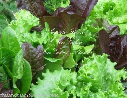 Summers Gourmet Heirloom laitue Mélange Graines naturelles non OGM Accueil et marché