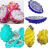 Shopmeeko 200pcs / Bag seltene mischungsfarben Pitaya Pflanze, drachenfruchtpflanze, sehr schöne obstpflanze, gesendetes Geschenk: Mix