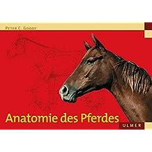 Anatomie des Pferdes (Veterinärmedizin)