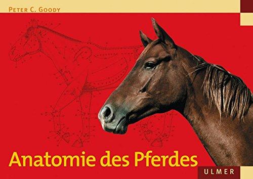 anatomie-des-pferdes-veterinarmedizin