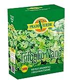 Ferri Sementi - Trifoglio nano per prato 500 gr.
