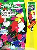 Wohlriechende Edelwicke 'Royal Prachtmischung' herlicher Duft, bunt, reichblühend ( mit Stecketiket) 'Lathyrus odoratus' Wicke