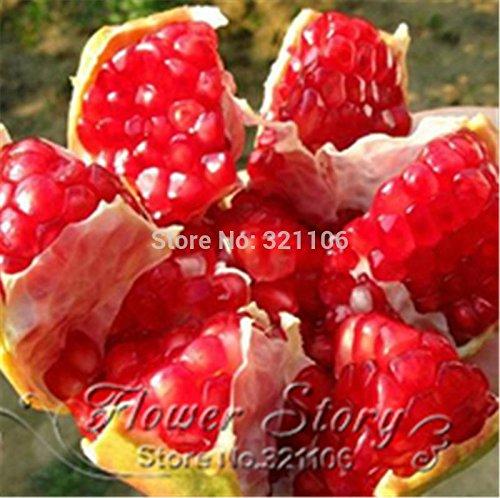 20pcs / lot, bonsaï graines de grenade très doux délicieux graines de fruits, de graines de plantes grasses d'arbres