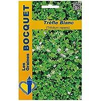Les Graines Bocquet - Graines De Trèfle Blanc (Trifolium Repens) Pour 40M² - Graines Potagères À Semer - Sachet De 100Grammes