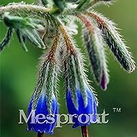50 Semillas Semillas Consuelda Symphytum officinale nuevos de la flor del jardín principal de la planta