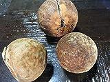 PLAT FIRM KEIM SEEDS: Avocado-Samen in der Saison 3 Samen Früchte Persea americana Riesen Choquette
